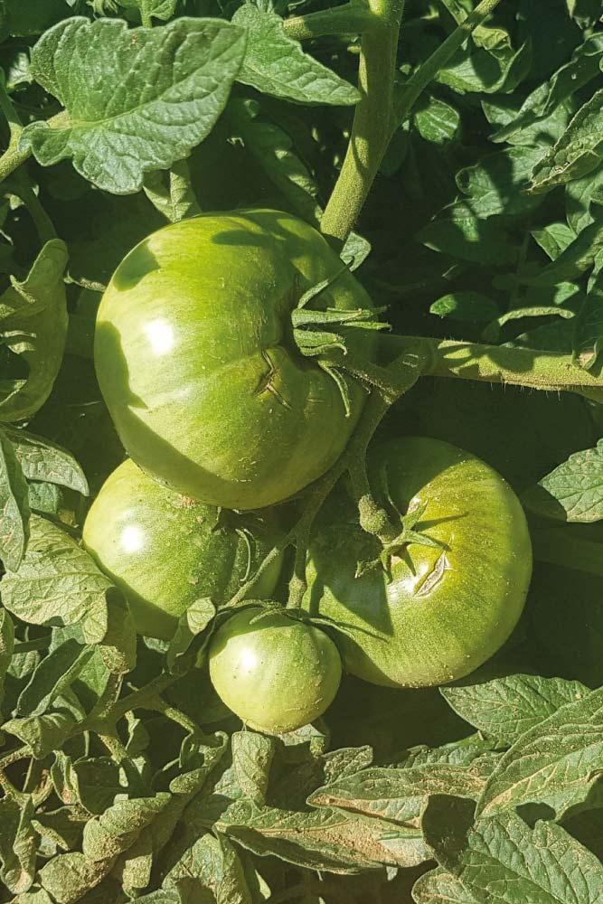 conservas-vegetales-de-alta-calidad